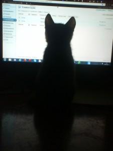 Кот у компа