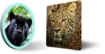 Леопард и пантера